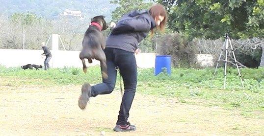 Psicología y Educación Canina